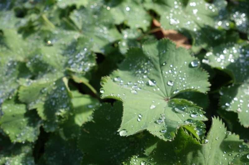 Saving Water Partnership and Soil Building Secrets