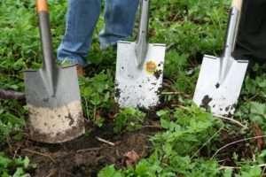 Soil Building Secrets Workshop by Ea Murphy